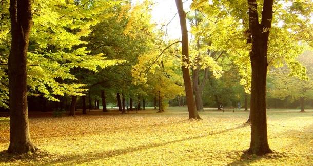 Kam s padajícím listím?