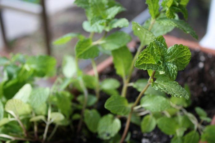 Příroda už nabízí první bylinky, pospěšme si, později nebudou!