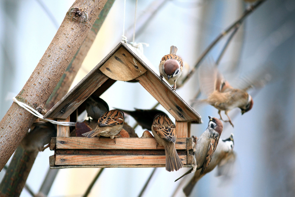 Krmítko na balkóně: jak pomoci ptáčkům v zimě