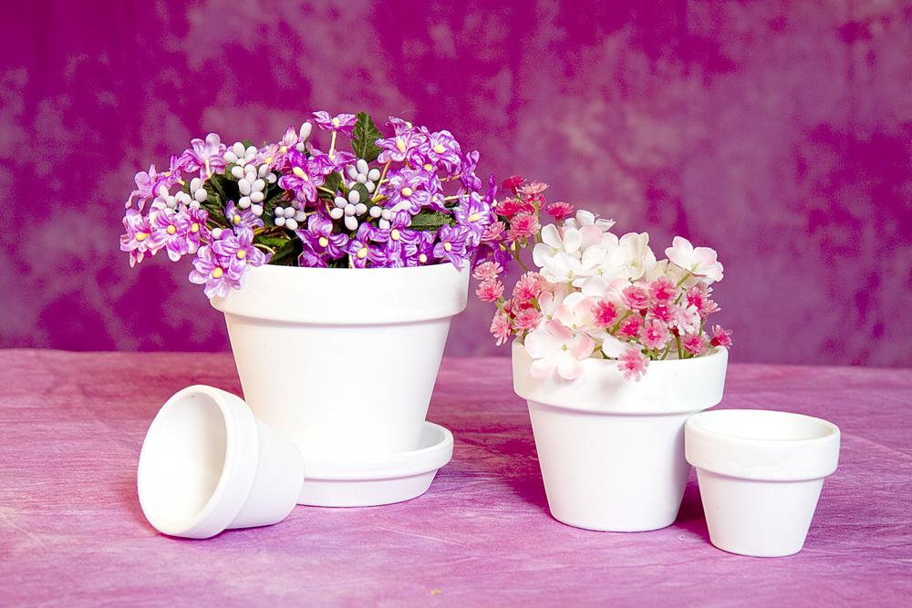 Jak na jarní přesazování pokojových květin