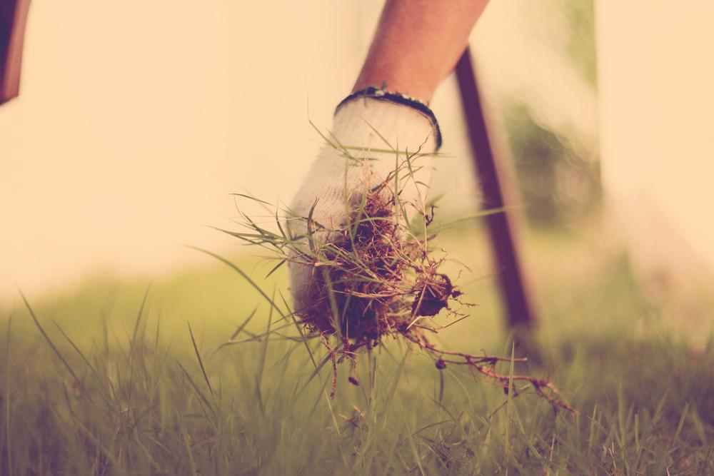 Jak se zbavit plevele bez chemie? Vyzkoušejte sůl nebo třeba ocet