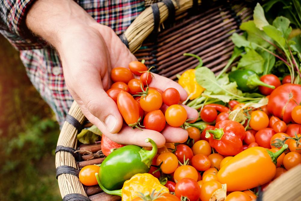 Uchovávání zeleniny ze zahrady: víte, jak na to?