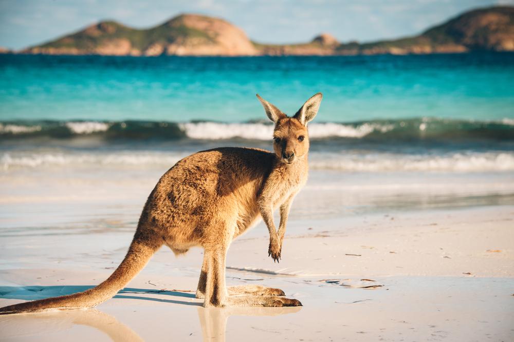 Jak na studium v Austrálii