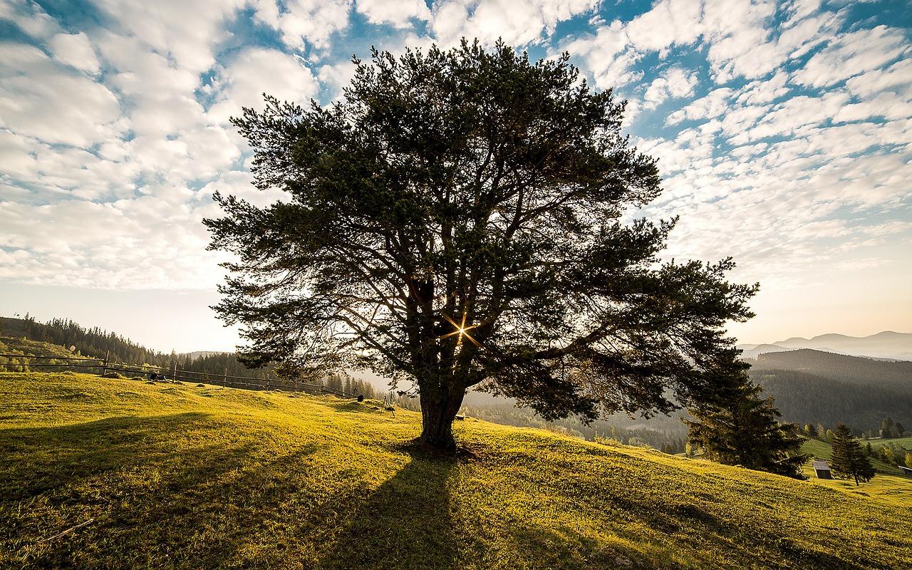 Vsaďte na zdraví z přírody. Co je nyní hitem?